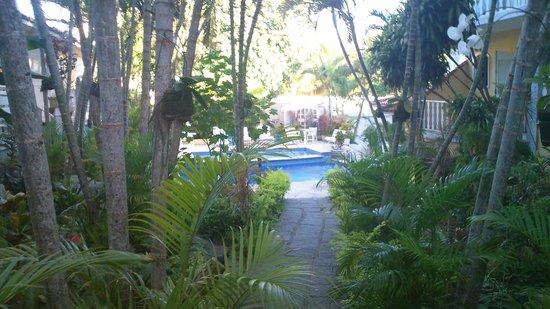 Auberge de la Langouste: Jardín y piscina