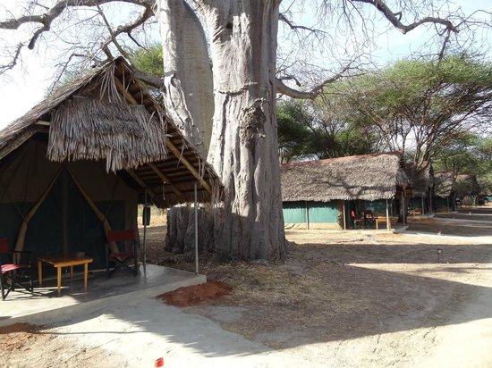 Tarangire Safari Lodge : Komfortable Zelte unter dem Baobab