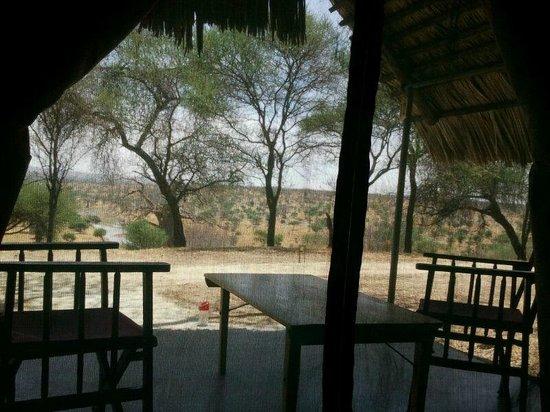Tarangire Safari Lodge : Herrliche Sicht auf die zum Fluss kommenden Tiere