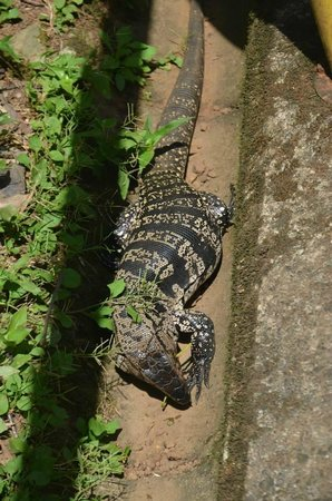 6147d014ef0a An alligator beneath one of the walkways to the falls - Picture of ...