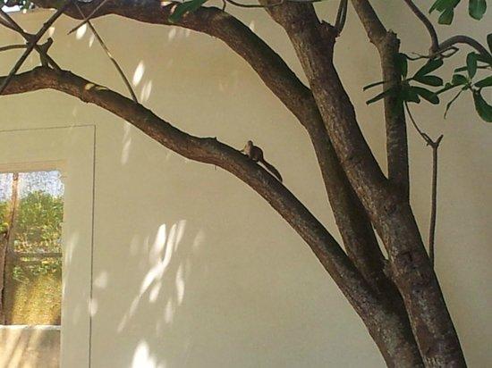 Temple Tree Resort & Spa: Små söta djur sprang på området.