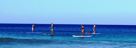 Playa Negra SUP Wave Riders: Paddling to view the wildlife below you