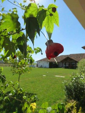 Hotel TerraVina: Vegetación