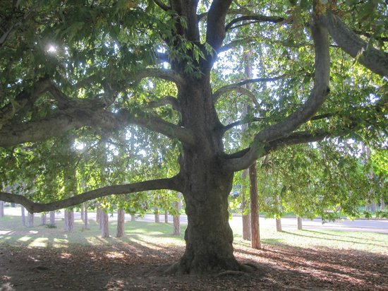 Bois de Boulogne: Булонский лес