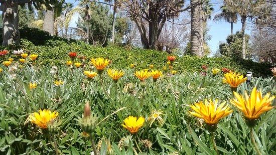 La Pila RV Park: Jardín