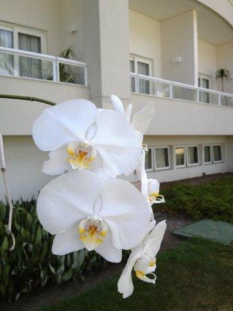 Sofitel Guaruja Jequitimar: Jardines y orquideas entre las palmeras