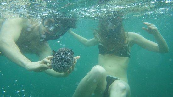 Samara Adventure Company: I'm touching a blowfish!