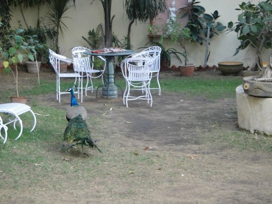 Hotel Anuraag Villa : sitting place for food