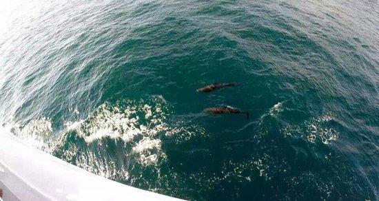 Manuel Antonio Catamaran Adventures: Dolphins