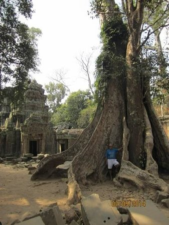Ta Prohm : Now that's a tree!