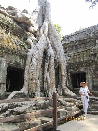 Ta Prohm : Trees growing all over the temples!