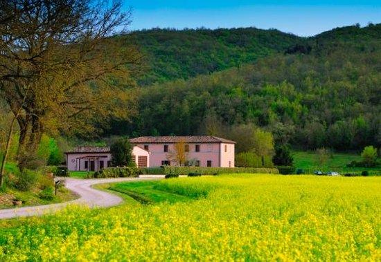 Agriturismo Il Corniolo : View from the access road