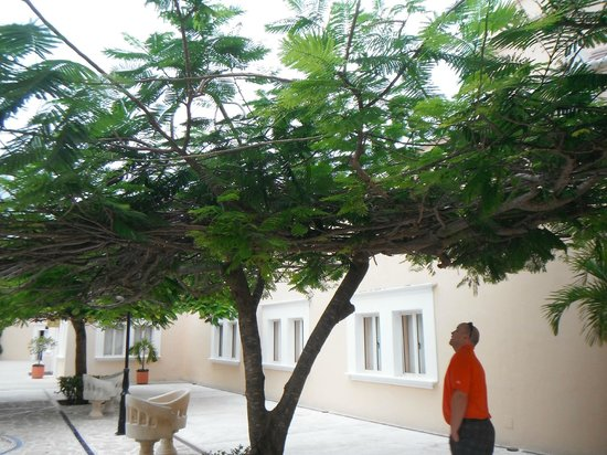 Excellence Riviera Cancun : Very intwined tree