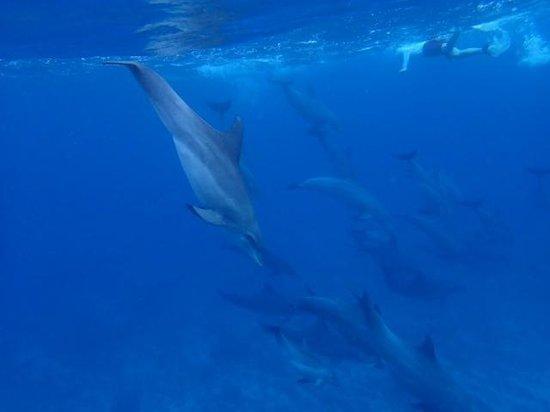Uroa Bay Beach Resort : Snorkling avec les dauphins à Kizimkazi
