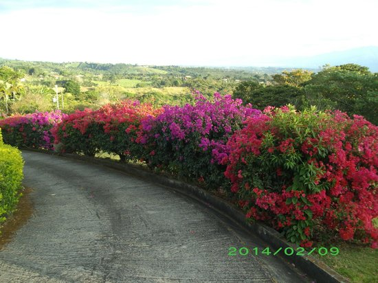 Finca Vibran Bed and Breakfast: Finca driveway
