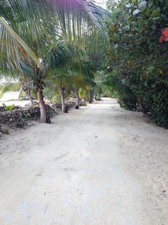 Small Hope Bay Lodge : path to the cabins. Beach on the left, cabins on the right