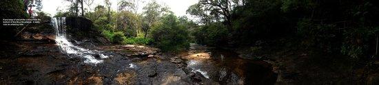 Dingo Tours : Jamison Creek