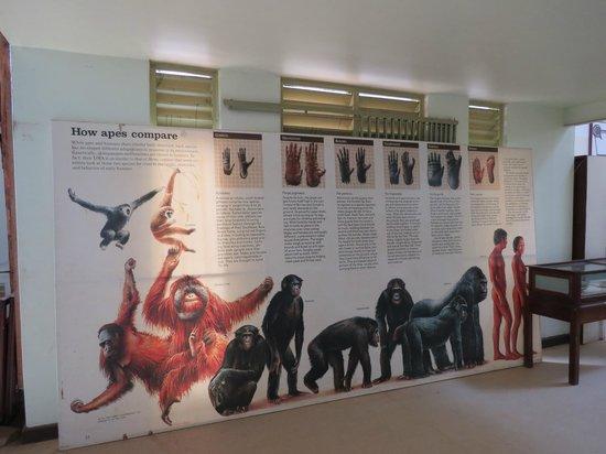 Uganda Museum: Sala animali