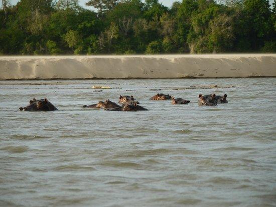 Sand Rivers Selous, Nomad Tanzania: Zuschauer