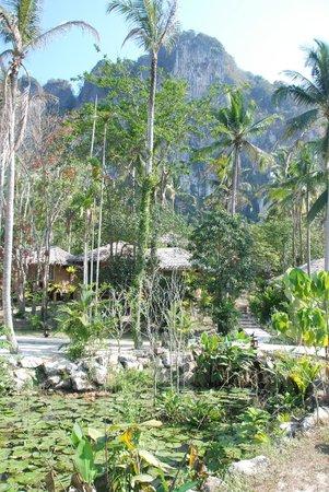 Ban Sainai Resort: Genral seeting of cottages