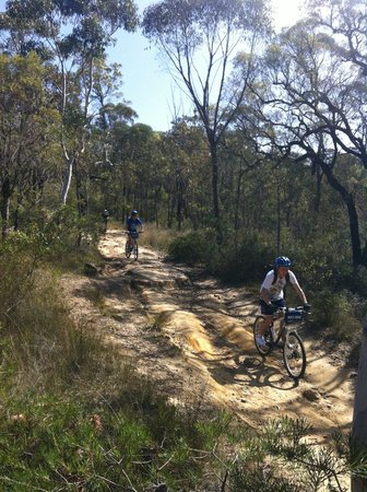 Manly Bike Tours and Bike Hire: Oaks fire trail