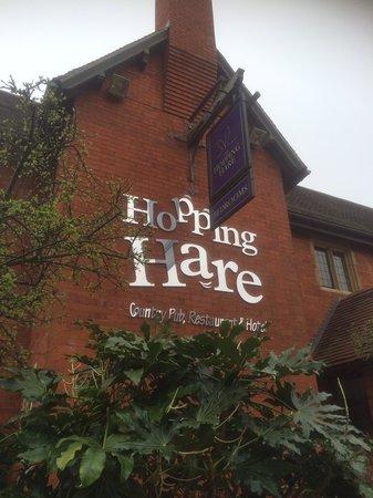 Hopping Hare: As shiny inside, as outside!