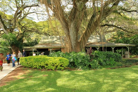 Tropical Farms Macadamia Nut Farm and Farm Tour: Building used as restaurant in film 50 first dates