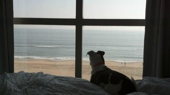 Residence Inn Virginia Beach Oceanfront : View in the bedroom from the 7th floor. Nice