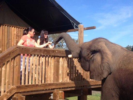 Vision Quest Safari Bed U0026 Breakfast: Feeding Malika The Elephant