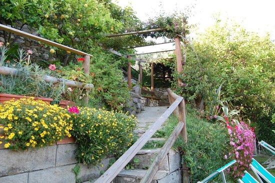 Albergo Degli Amici : Roof Top Garden