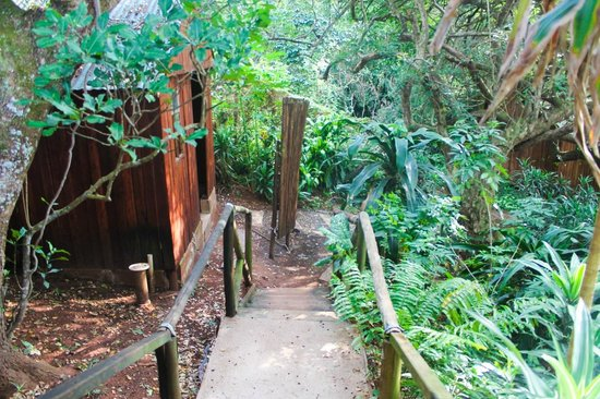 Secret Spot International Backpackers and Surf Camp: Walkway to cabin