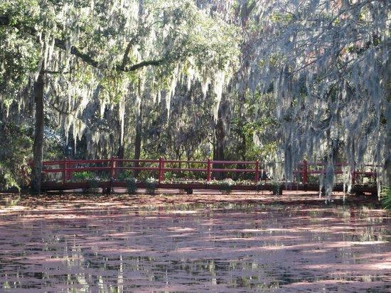 Magnolia Plantation & Gardens: Magnolia Garden