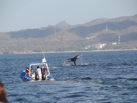 Islas Marietas: Whales!