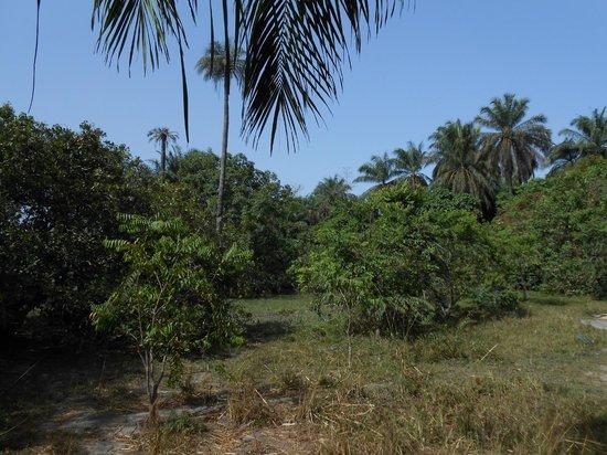 Mandina River Lodge: in the Makasutu Forest