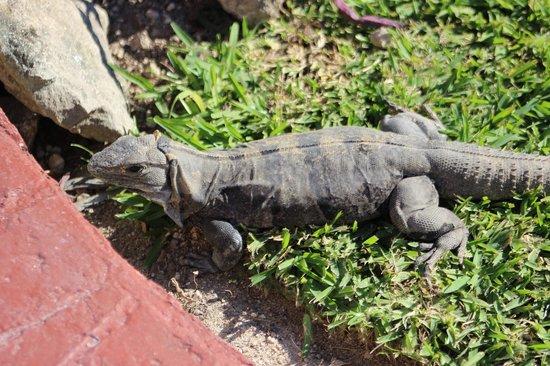 Barcelo Maya Caribe: Lots of critters!  So cute!