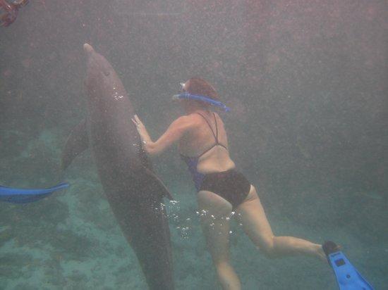 Dolphin Academy Curacao : So fun to swim with them