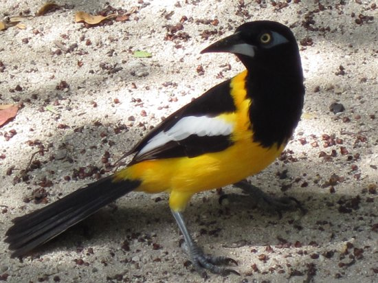 Kenepa Beach: Lots of pretty birds too!