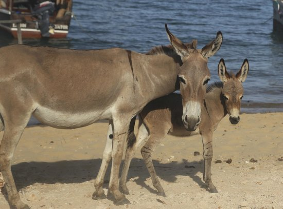 Banana House & Wellness Centre: Donkeys