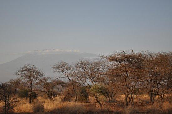 AA Lodge Amboseli: Вид на Килиманджаро.