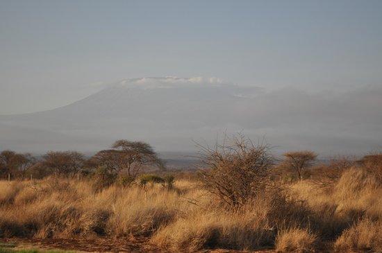 AA Lodge Amboseli: Вид из окна