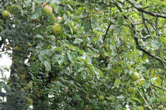 Parc du Thabor : Урожай яблок