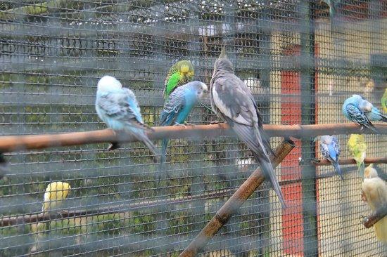 Parc du Thabor : Вольер с попугаями