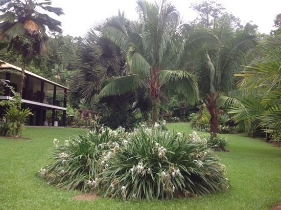 Misty Mountains Tropical Rainforest Retreat: villa
