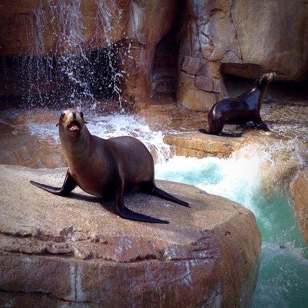 SeaWorld San Diego : I always enjoy sea lions. They are very athletic.