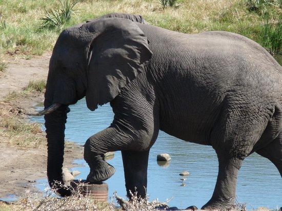 Tembe Elephant Park Accommodation: Elefant