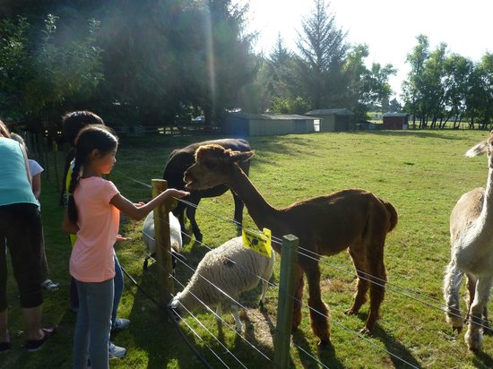 Rotorua Hideaway Lodge : Animal Feeding Time