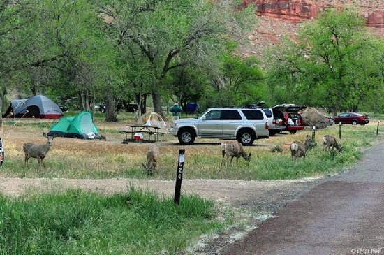 Watchman Campground : Les emplacements