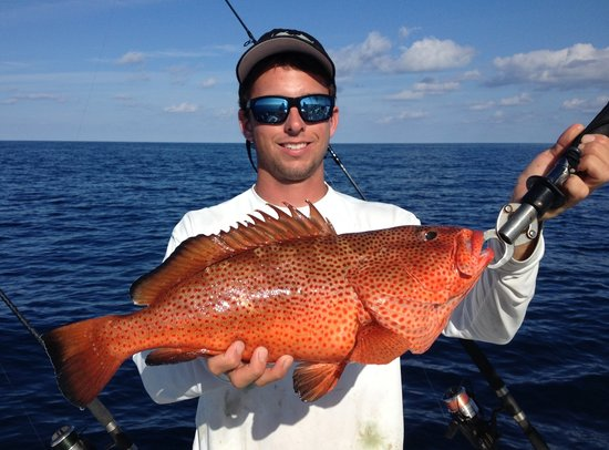 Andrew 39 s strawberry grouper picture of captain dave for Captain dave s fishing
