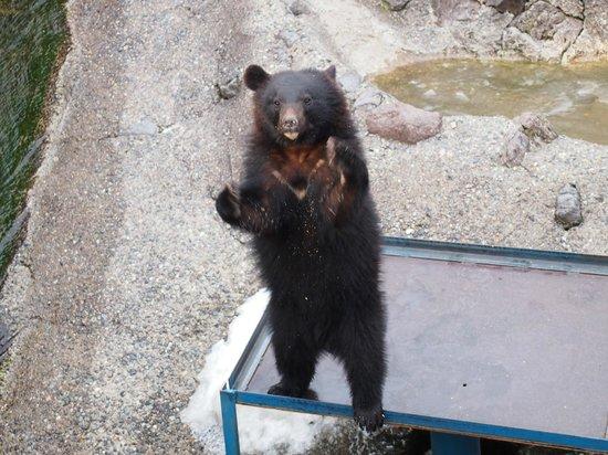 Okuhida Bear's Park: おねだりのポーズ