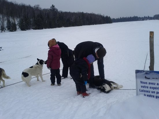 Auberge du Lac Morency: sled dogs